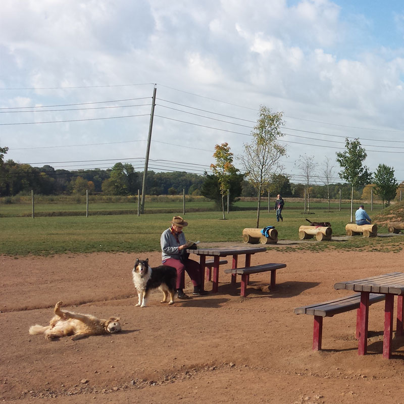MCPC Offleash dog park project by E&LP