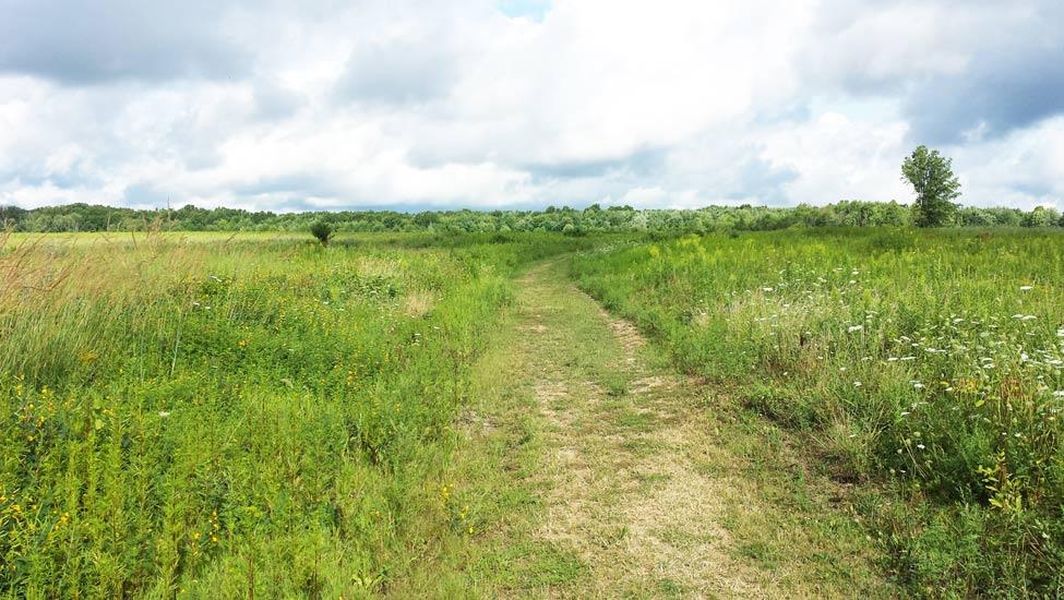 Mercer Meadows Master Plan – Engineering & Land Planning Associates